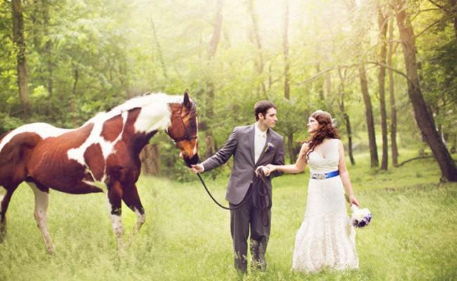 快樂農場 – 伴婚動物
