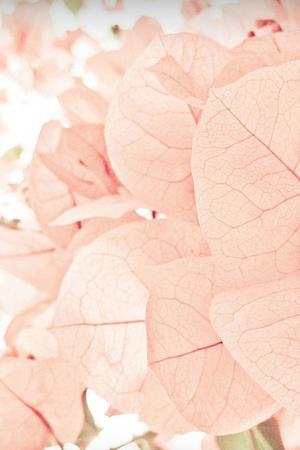 sweet pink wedding palette praise wedding. Black Bedroom Furniture Sets. Home Design Ideas