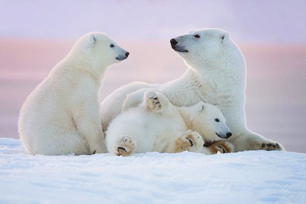 愛在大自然 – 25張溫暖人心動物家庭寫真