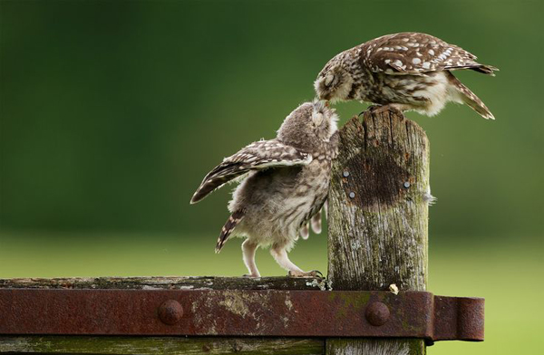 22-Mark Bridger
