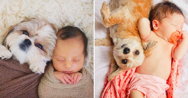 毛小孩與小寶貝 – 20張超可愛狗狗與嬰兒的成長紀錄!